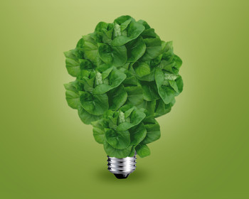 Light bulb with plant instead of bulb