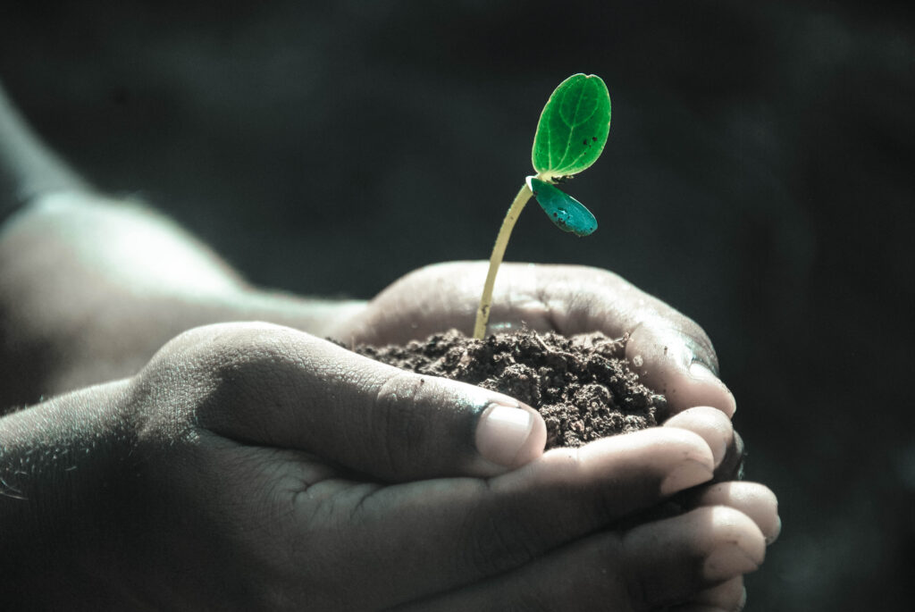 A person holding soil with a budding flower in it